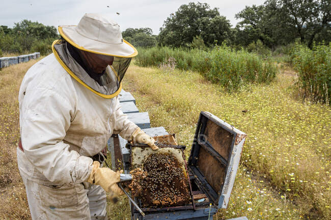 Rural and natural beekeeper, working to collect honey from hives with honey bees. Beekeeping concept, self-consumption, — Stock Photo