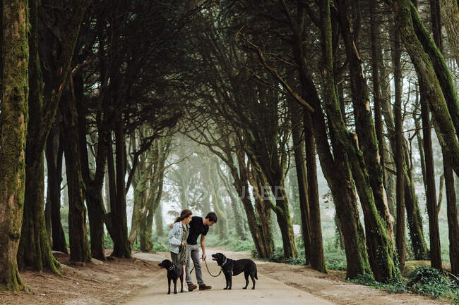 Young couple walking dogs in the park — Stock Photo