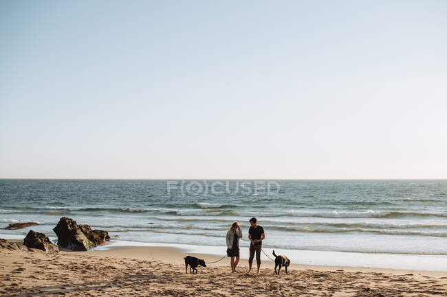 Young couple walking dogs on the beach — Stock Photo