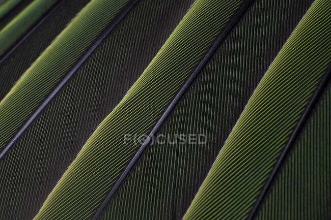 A macro shot of green colorful parakeet feathers, bird anatomy — Stock Photo