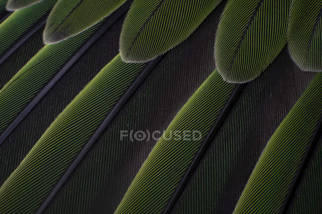 Macro details of a parrot colorful parrot feathers — Stock Photo