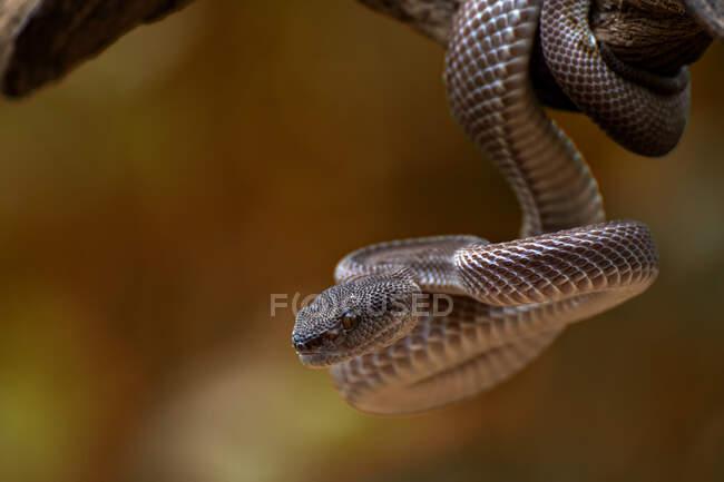 Serpiente animal en el árbol en el fondo de la naturaleza - foto de stock
