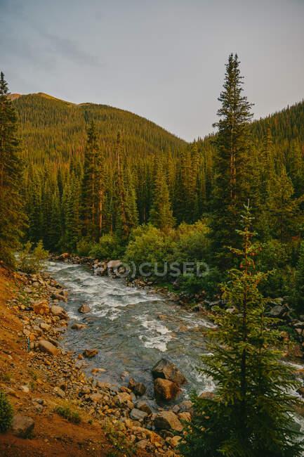 Чудова маленька ріка в горах. Колорадо — стокове фото