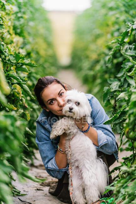 Bella giovane donna tiene e bacia il suo cane nel mezzo di una pianta di pomodoro — Foto stock
