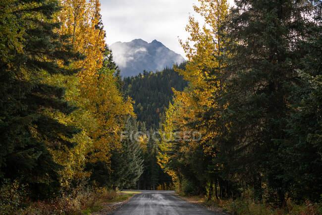 Paisaje otoñal con árboles y bosque - foto de stock