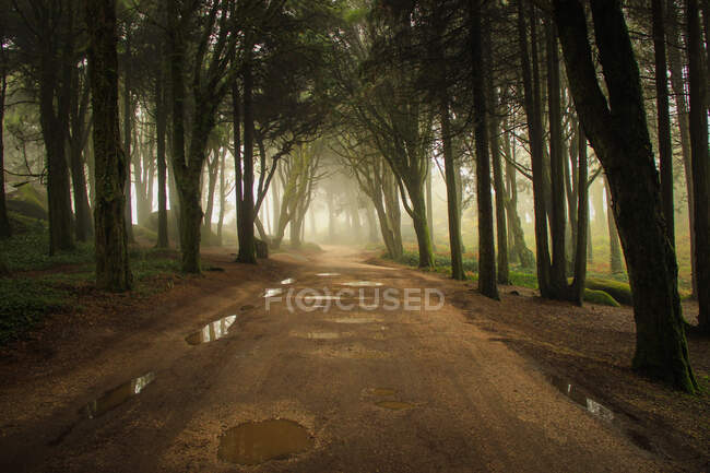 Scenic shot of road through forest — Stock Photo