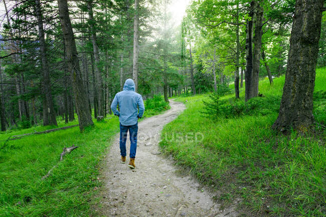 Man Hiking On Footpath In Wooded Green Forest Under Sunlight — Stock Photo