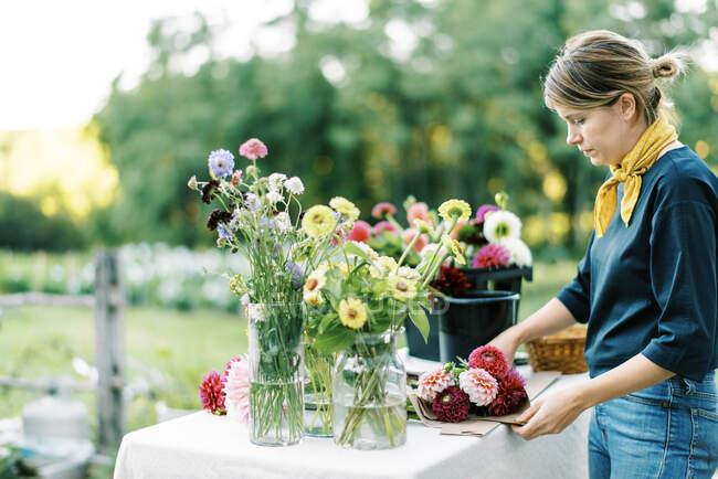 Жіночий комерсант і фермер квітів влаштовують букети далії. — стокове фото