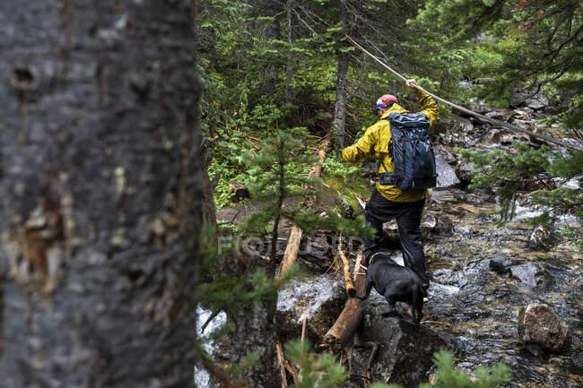 Подорож з собакою в лісі. — стокове фото