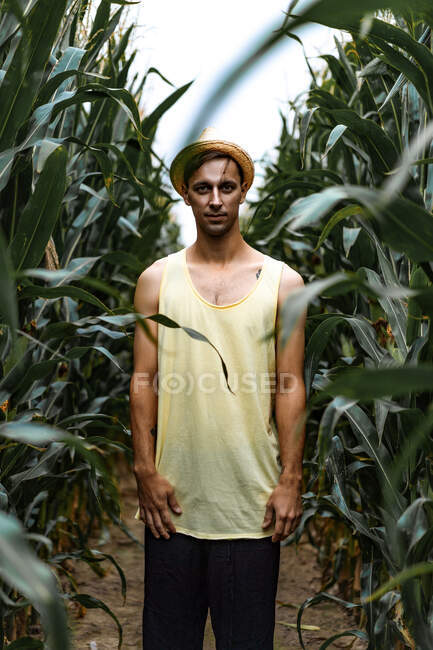 Young man in hat picking up corn in a corn field — Stock Photo