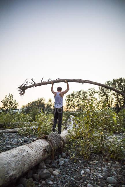 Людина старанно врівноважує дерево над головою, коли йде по колоді. — стокове фото