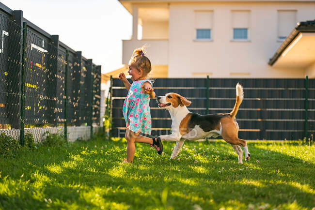 Baby girl running with beagle dog in backyard in summer day. Domestic animal with children concept. Dog chasing 2-3 year old, running after treat. — Stock Photo