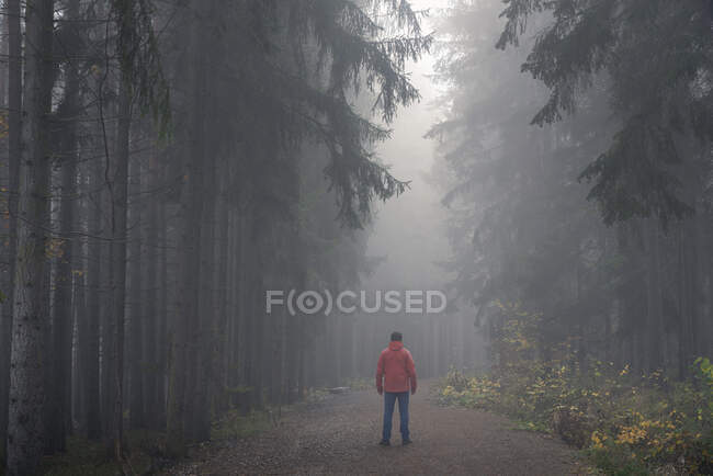 Man in red jacket standing on path in dark eerie forest on misty morning (MR), Central Bohemian Region, Czech Republic — Stock Photo
