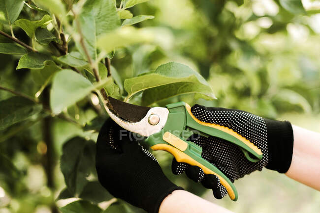 Woman with scissors pruning tree in a garden. — Stock Photo