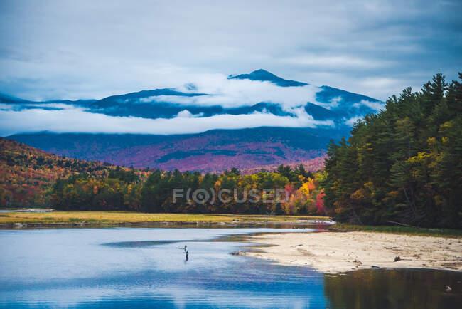 Fliegenfischer wirft in Fluss mit Berg und hellem Laub — Stockfoto