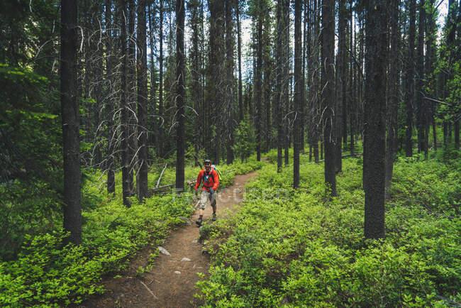 Homem se aventura através de um clássico Pacífico Noroeste alpino escalada abordagem paisagem de vegetação e árvores altas. Washington. — Fotografia de Stock