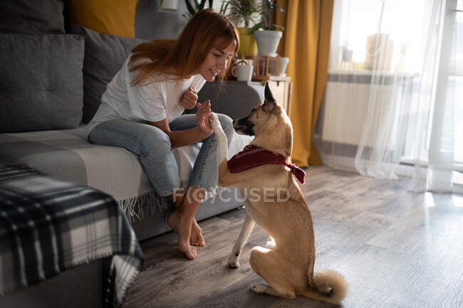 Full body barefoot lady in casual outfit smiling and giving high five to dog while sitting on couch and playing at home — Stock Photo