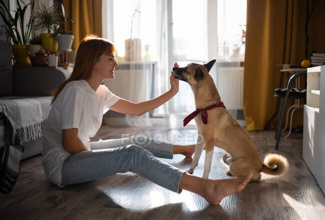 Side view of barefoot woman in casual outfit smiling and feeding obedient dog while sitting on floor and resting at home — Stock Photo