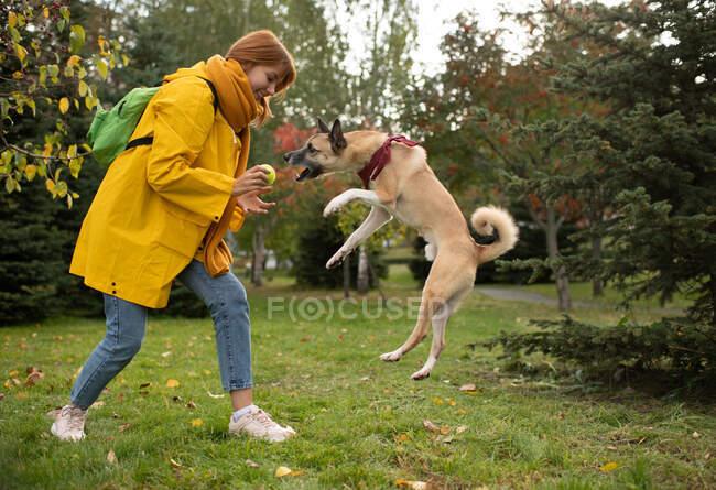 Vista laterale di felice giovane femmina in cappotto giallo sorridente e dando palla al cane saltellante eccitato mentre gioca sul prato in autunno parco — Foto stock