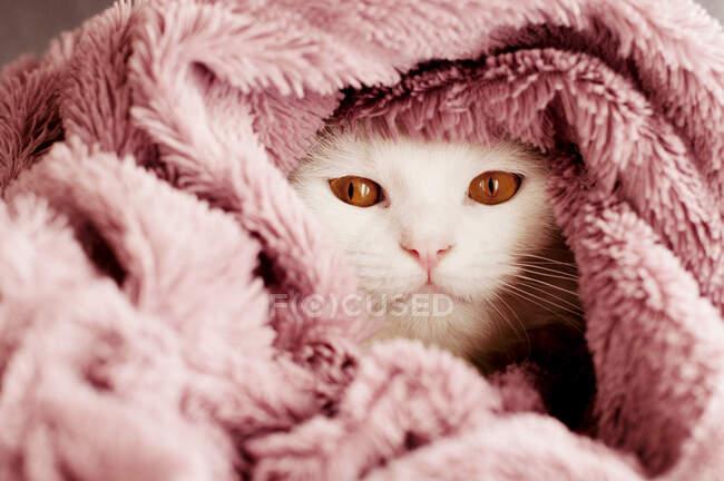 Милый белый пушистый кот в одеяле дома — стоковое фото