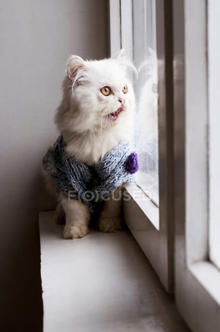 Cute white fluffy cat looking at window at home — Stock Photo