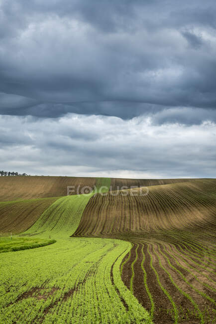 Cultivated agricultural field and rolling hills in Czech Republic — Stock Photo