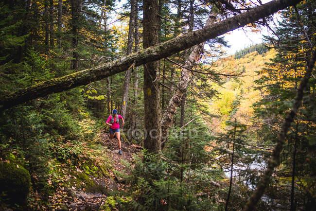Mujer corriendo por el bosque en las Montañas Blancas - foto de stock