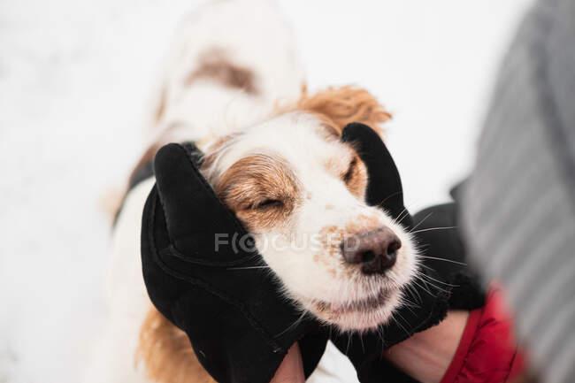 Руки в зимові рукавички обіймають задоволеного собаку заплющеними очима. Співчуття, перебування з домашніми тваринами, моменти реального життя — стокове фото