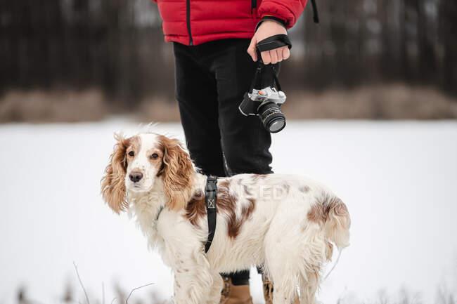 Spaniel perro está junto al hombre sosteniendo una cámara. Estilo de vida con mascotas, caminar o caminar con el perro, tomar fotos, concepto de fotografía de mascotas - foto de stock