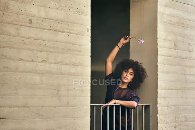 Bella ragazza con i capelli afro tiene un fiore. Lei è appoggiata su un balcone. — Foto stock