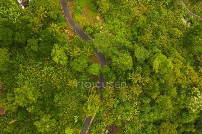 Top down overhead aerial view of asphalt road leading through lush green jungle Curved rural road through the rainforest HQ — Stock Photo
