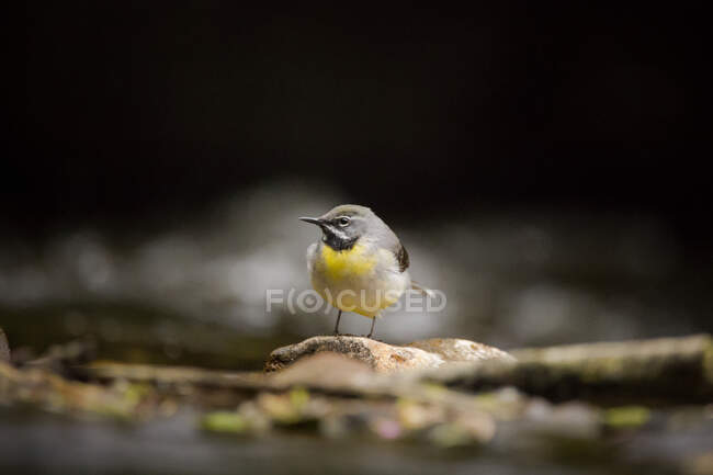View of a bird in nature on blurred background — Stock Photo