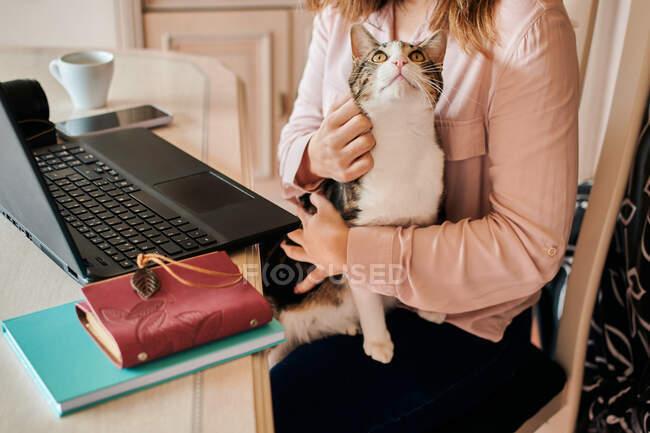 Молода жінка доглядає за котом, коли працює вдома. — стокове фото