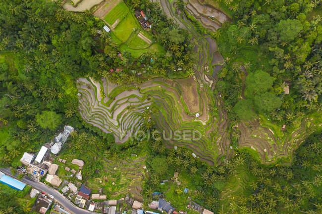 Vista aerea dall'alto verso il basso delle piantagioni di risone agricole vicino a un piccolo villaggio rurale a Bali, Indonesia — Foto stock