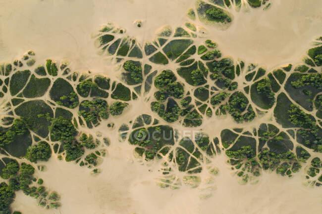 El follaje duro crece en Sands, Little Sahara State Park, OK - foto de stock