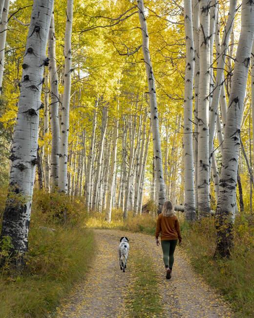 Vista trasera de la mujer caminando con el perro en medio de árboles de otoño en el bosque durante las vacaciones - foto de stock