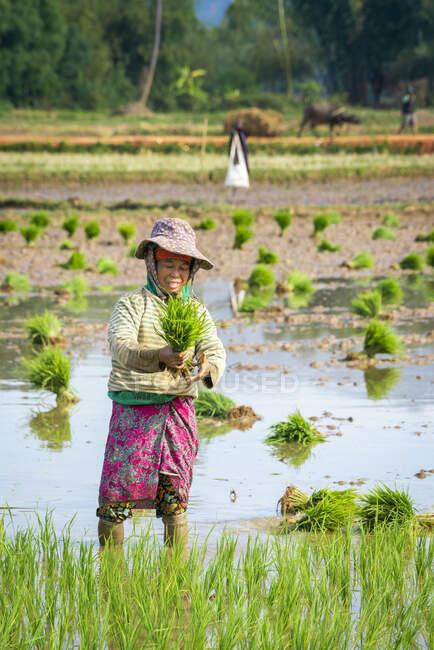 Republic of the Union of Myanmar life scene — стокове фото