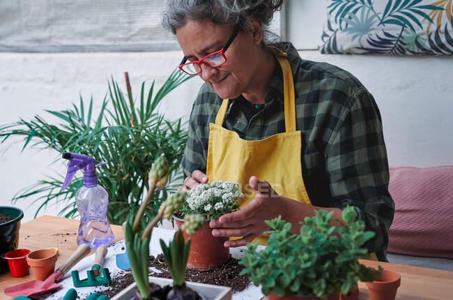 Mulher sorridente preparando plantas de jardim em casa na primavera — Fotografia de Stock