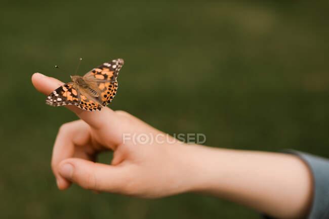 Hermosa mariposa y mano en el fondo de la naturaleza - foto de stock