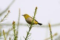 Птица, сидящая на ветку дерева — стоковое фото