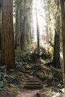 Escaliers moussus à forest en rétro-éclairé — Photo de stock