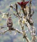 Falcão empoleirar-se na árvore de cauda vermelha — Fotografia de Stock