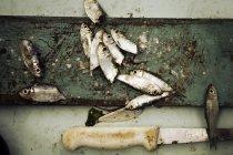 Geschnittene glänzende Köderfischen an Bord mit Messer — Stockfoto