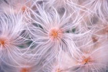 Pink furry flowers, top view — Stock Photo
