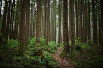Singola traccia sentiero che si estende attraverso lussureggianti foreste — Foto stock