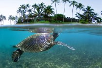 Underwater View Of Hawaiian Sea Turtle With Palms — Stock Photo