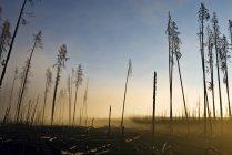 Arbres brûlés en fumée avec ciel coucher de soleil — Photo de stock