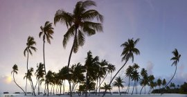 Panoramic view of palm trees on beach with sunset sky on background — Stock Photo