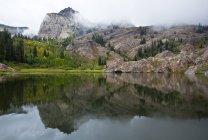 Сосни на пагорбі, що відображають у воді озера — стокове фото