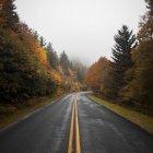 Route de montagne sinueuse entre bois automne — Photo de stock